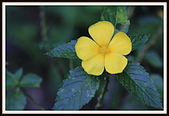 植物(plants):_MG_4331.JPG