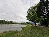 20200430加羅林魚木:IMG_20200422_155140.jpg