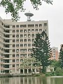 20200331中央大學流蘇:IMG_20200331_151640.jpg