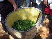 園丁計畫之一:採茶製茶品茶:採茶成果.JPG