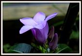 植物(plants):_MG_4336.JPG