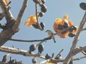 植物(plants):IMG_20210314_151012_mh1615707154272.jpg