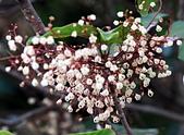 植物(plants):IFA_3664.JPG