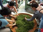 園丁計畫之一:採茶製茶品茶:DSCN1684.JPG
