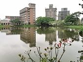 20200331中央大學流蘇:IMG_20200331_143616.jpg