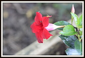 植物(plants):_MG_4307.JPG