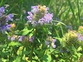 植物(plants):1462529480850.jpg