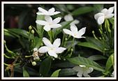 植物(plants):_MG_4311.JPG