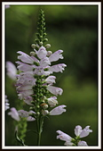 植物(plants):_MG_4324.JPG