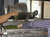 園丁計畫之一:採茶製茶品茶:乾燥.JPG