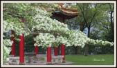 植物(plants):FB_IMG_1615685254684_mh1615685318438.jpg