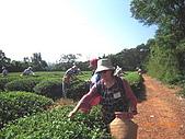 園丁計畫之一:採茶製茶品茶:第一次當採茶姑娘.jpg