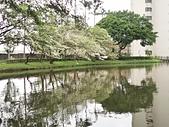 20200331中央大學流蘇:IMG_20200331_151517.jpg