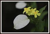 植物(plants):_MG_4328.JPG