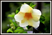 植物(plants):_MG_4317.JPG