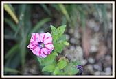 植物(plants):_MG_4339.JPG