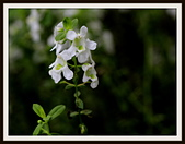 植物(plants):_MG_4338.JPG