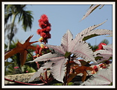 植物(plants):P2091885.JPG