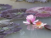 202003莫內的花園:IMG_20200306_114006.jpg