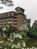 20200331中央大學流蘇:IMG_20200331_235138.jpg