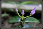 植物(plants):_MG_4334.JPG