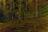 風景攝影精華:螢火蟲