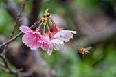 生態攝影:春意