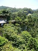 歡樂山行玫瑰:P1050640.JPG