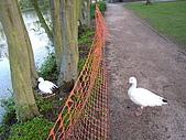 York Life:護欄保護母鵝
