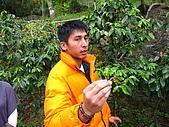 阿里山賞落櫻:咖啡店老闆。谷坑咖啡第一名
