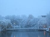 三月 冬末.初春:IMG_3309.JPG