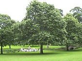 Fountains Abbey:英國對文化推行不遺餘力