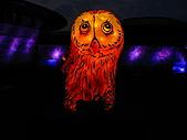 2011 台灣燈會:1000220 012.jpg