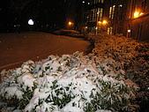 三月 冬末.初春:宿舍大門口旁的叢