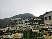 阿里山賞落櫻:IMG_0483.JPG