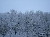 三月 冬末.初春:IMG_3318.JPG