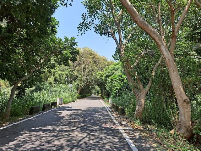 2021 8 桃園新屋綠色隧道 (13).jpg - 桃園新屋綠色隧道+永安漁港+三號咖啡