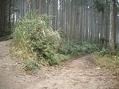 075~鵝公髻山至山上人家順遊清泉風景區:三叉路口左行