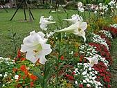 大安森林公園970413:IMG_0089.jpg