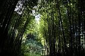 東眼山森林遊樂區&怡玲家小聚:IMG_3887.jpg