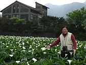 竹子湖海芋田:DSCF3249.jpg