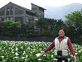 竹子湖海芋田:DSCF3250.jpg