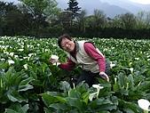 竹子湖海芋田:DSCF3251.jpg