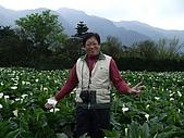 竹子湖海芋田:DSCF3252.jpg