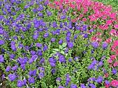 大安森林公園970413:IMG_0081.jpg