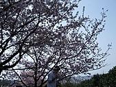 天元宮吉野櫻:DSCF2994.jpg