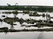 龍潭湖&羅東林業文化園區2012.03:IMG_1951.jpg