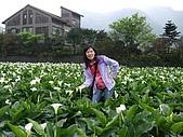 竹子湖海芋田:DSCF3239.jpg
