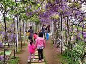 三芝紫藤咖啡園2013.03:IMG_526445.jpg