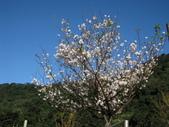 淡水楓樹湖步道木蘭花2018.03.01:IMG_0914.JPG
